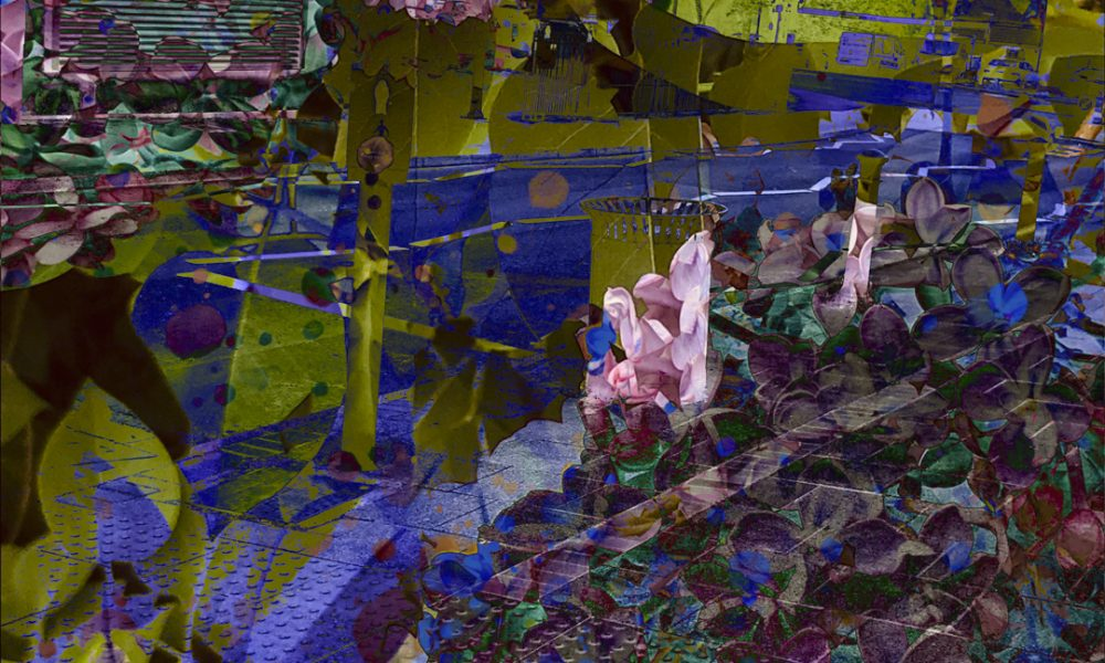 overlapping images of nature and urban environments
